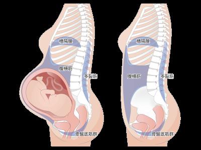 妊娠中 出産後 インナーマッスル 骨盤底筋